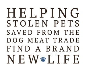 Helping stolen dogs saved from the dog meat trade find a brand new life